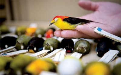 Museum of Natural Science bird exhibit